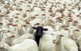 Baa Baa Allison, Have You Any Wool?