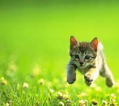 Wait for me, guys!
