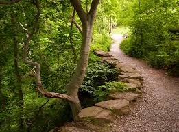 Where will this path lead?