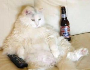 cat_drinking_beer_TV