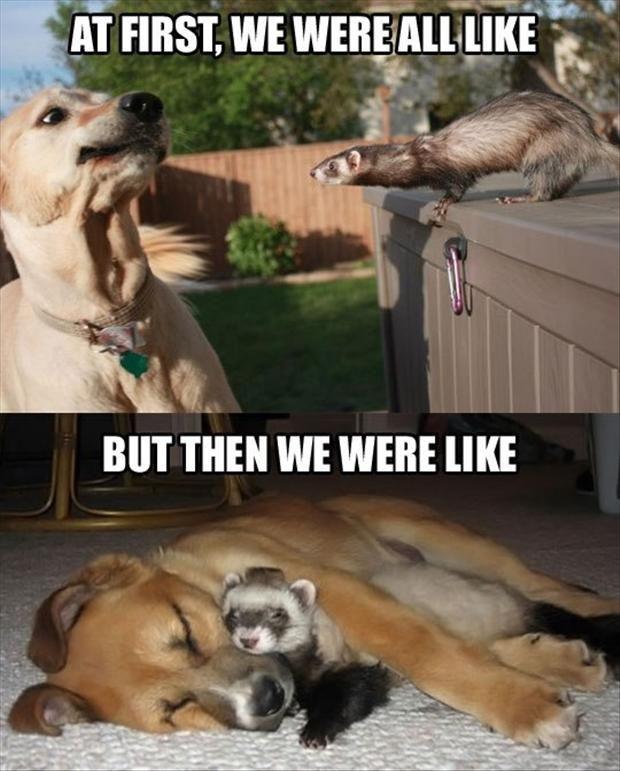 Dog Ferret